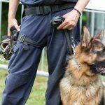 Salaire et formation requise pour devenir éleveur canin