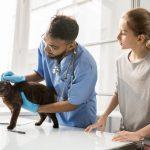 Travailler avec les animaux : les principaux métiers